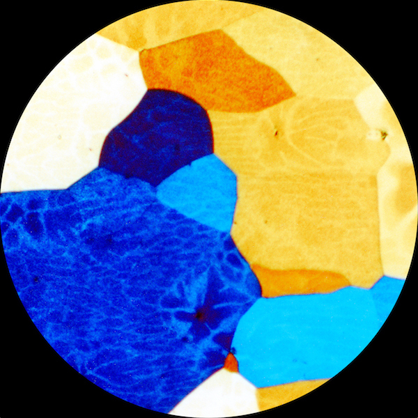 Golden Retriever - Capablanca
